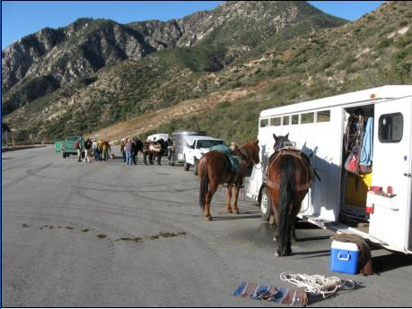 Horse and mule at Upper Bear Creek trailhead